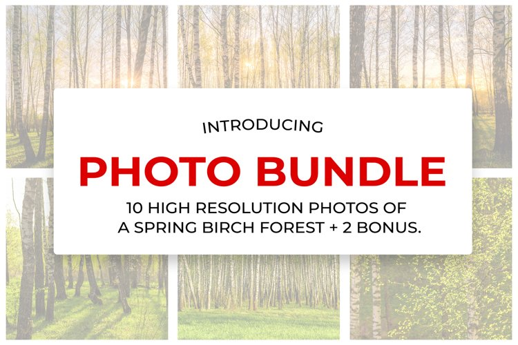 10 high resolution photos of a spring birch forest.