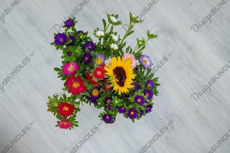Color garden flowers   Revosolle