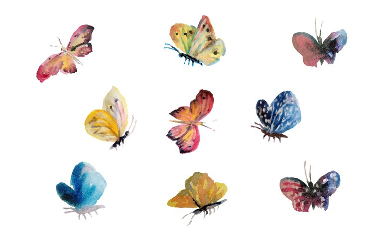 Beautiful watercolor butterflys flying, insect painted white