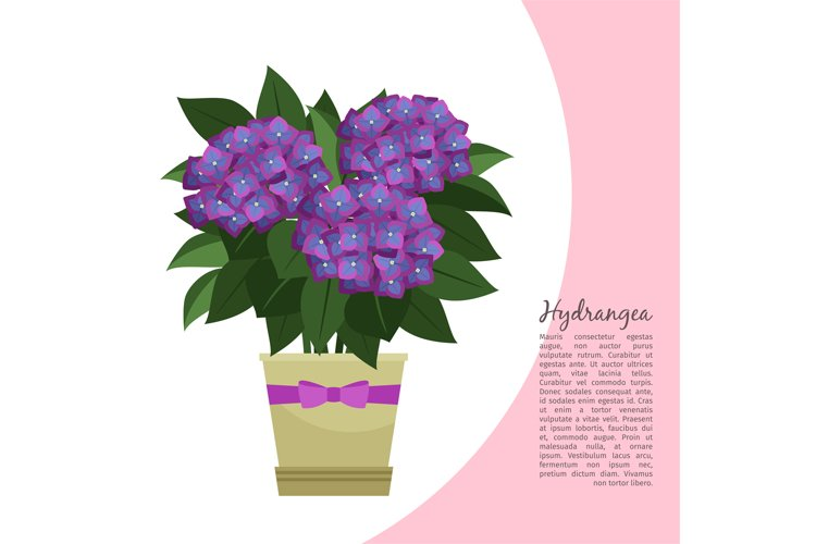 Hydrangea plant in pot banner example image 1