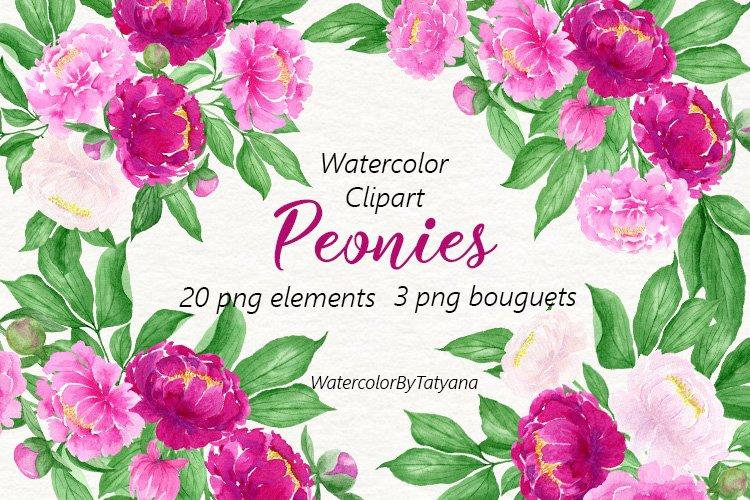 Watercolor Flowers Peonies Clipart. Pink Burgundy Flowers