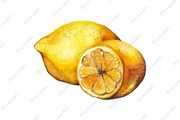 Watercolor lemon citrus yellow fruit still life isolated example image 1