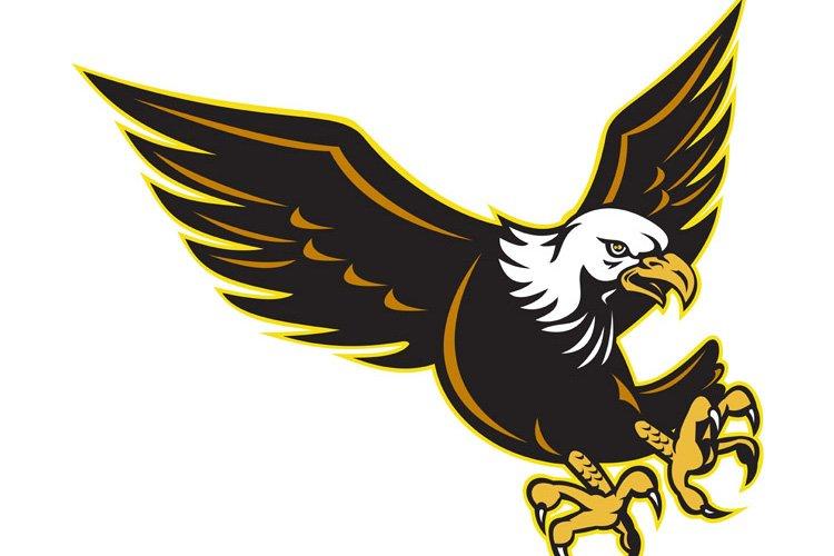American Bald Eagle flying example image 1