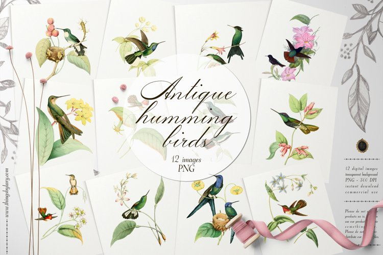 12 Vintage Humming Birds Ephemera Transparent Images PNG