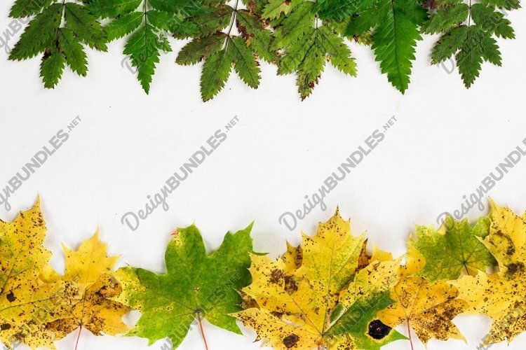 Creative layout of colorful autumn leaves example image 1