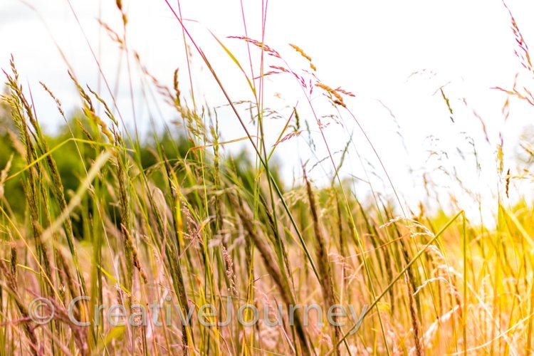 Summer field with herbage example image 1
