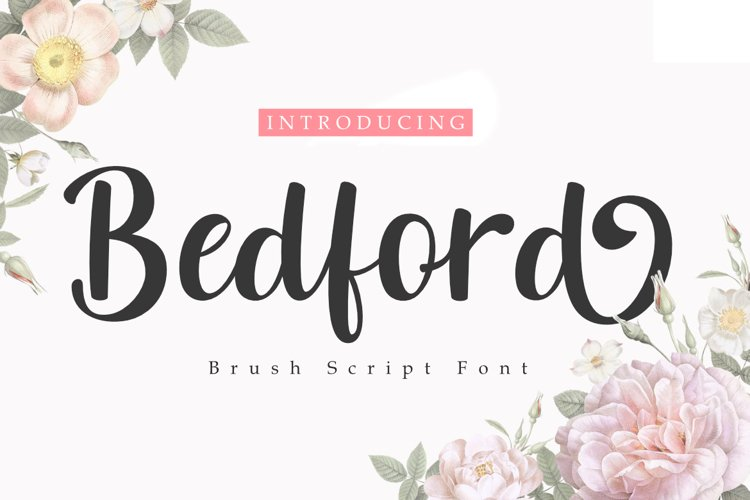 Bedford   A Brush Script Font example image 1