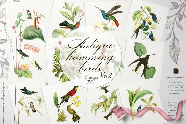 12 Vintage Humming Birds Vol.2 Ephemera Transparent PNG example image 1