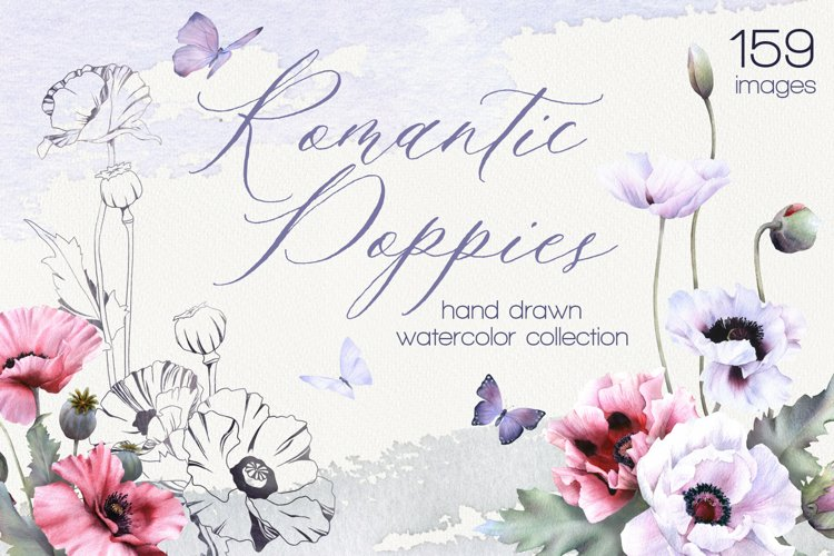 Romantic Poppies watercolor and linear floral collection