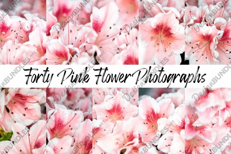 40 Pink Flower Blossom Photographs Close Up example image 1