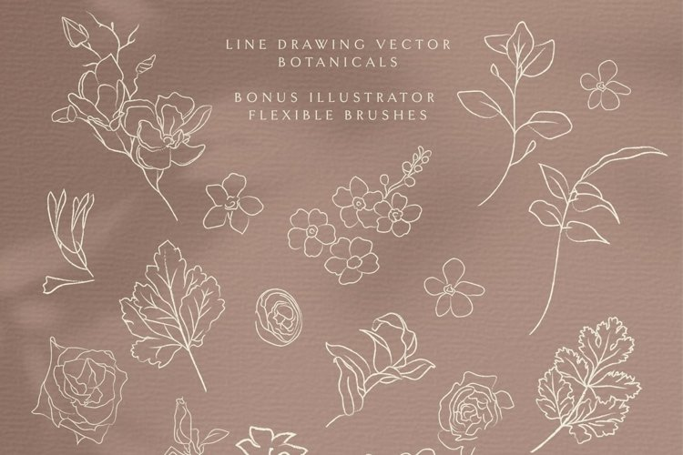 Line Drawing Botanical illustrations. Plants, Wildflowers. example image 1