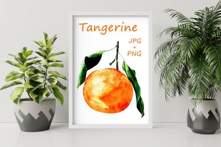 watercolor fruit orange tangerine with green leaves