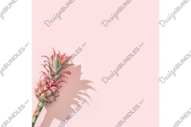 Dwarf Ornamental pink Pineapple flower on pink