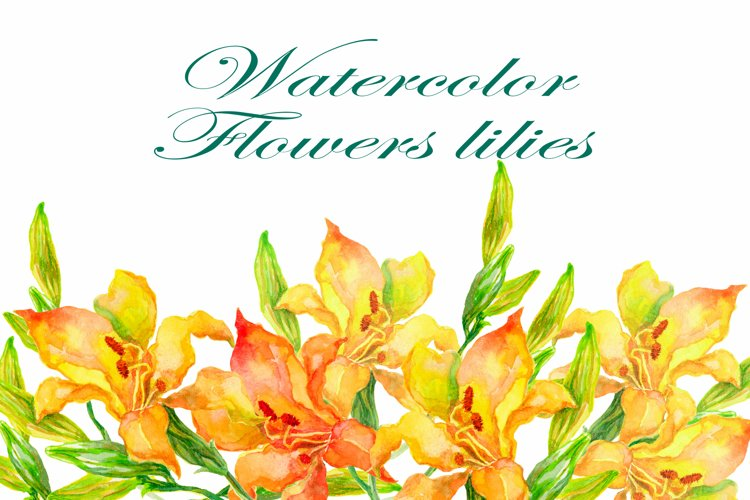 Flowers lilies watercolors clipart collection