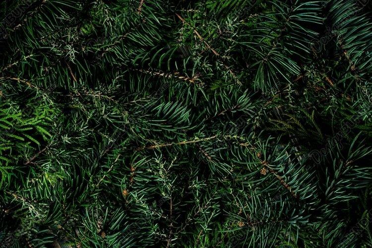 Coniferous plant texture example image 1