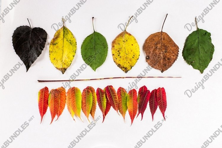 creative composition colorful autumn leaves example image 1
