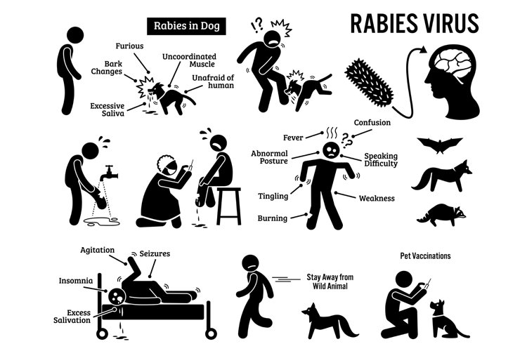 Rabies Virus in Human and Animal Stick Figure Pictogram Icon example image 1