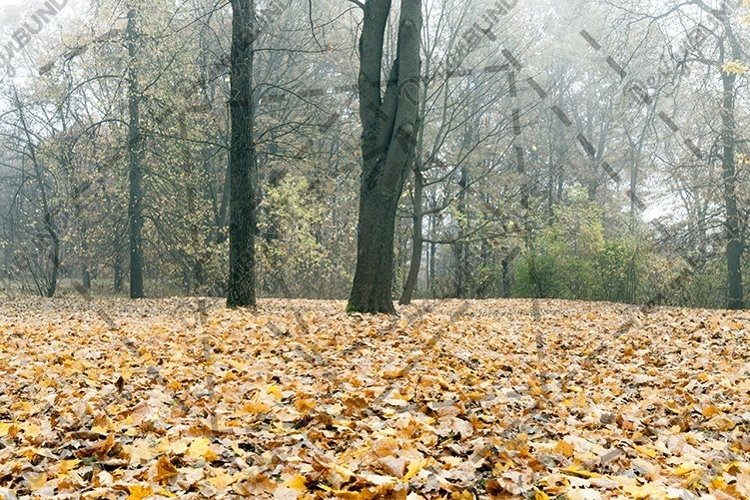 Cloudy weather in the autumn forest example image 1