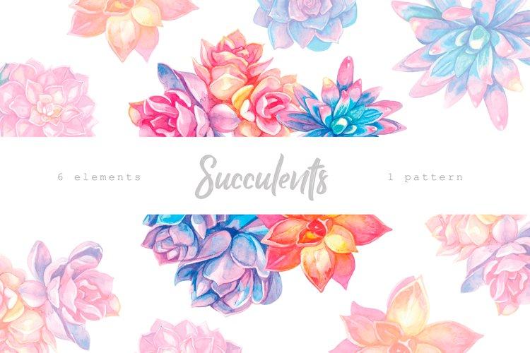 Succulents. Watercolor Floral Illustrations. Botanical Art.