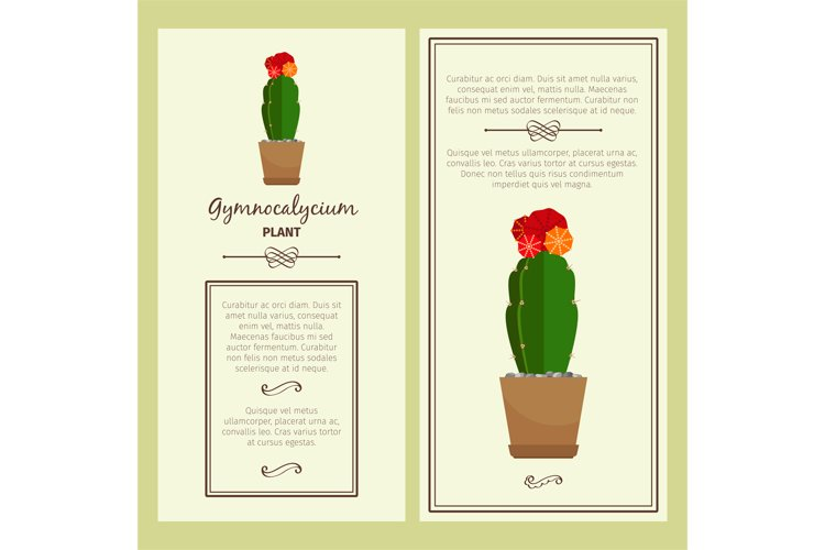 Greeting card with gymnocalycium plant example image 1