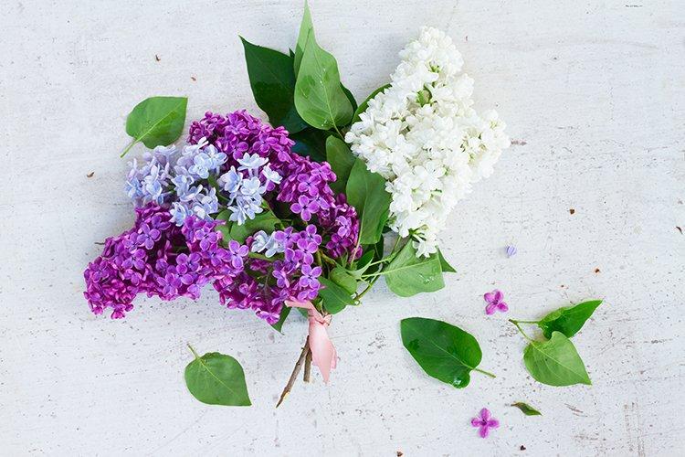 Posy of fresh lilac flowers