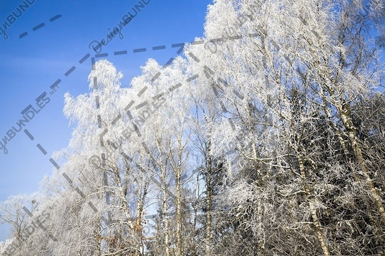 birch frost example image 1