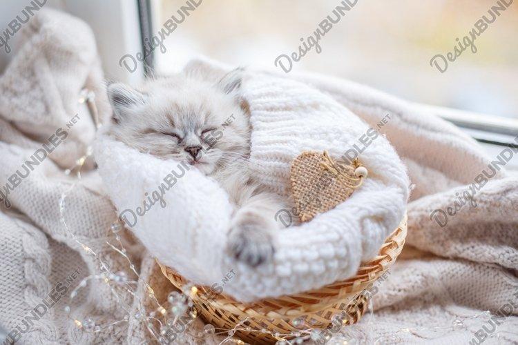 the kitten sleeps in a basket on the window