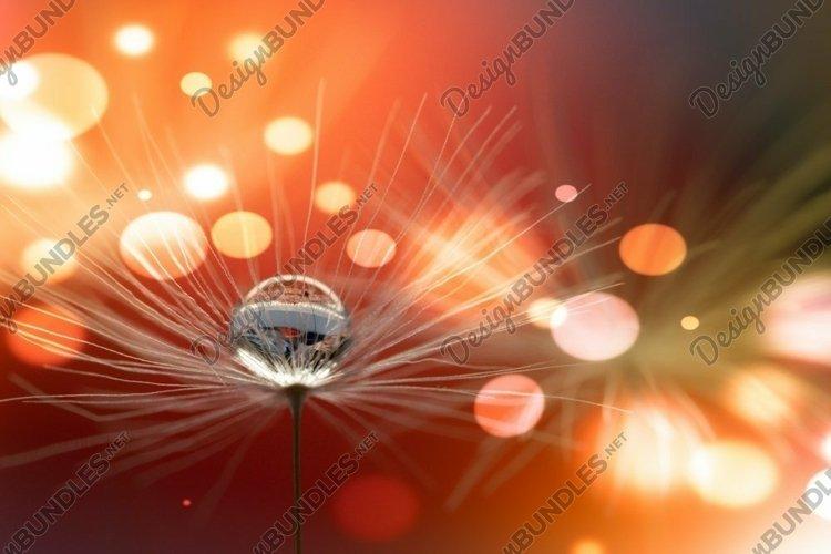 Dandelion flower seeds parachute