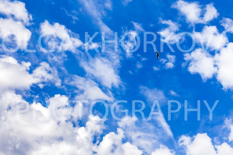 Seagull flying alone on blue sky with clouds example image 1