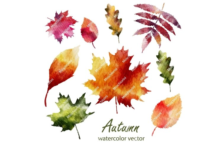 Set 3 Eps of illustrations of the fall watercolorleaves example image 1