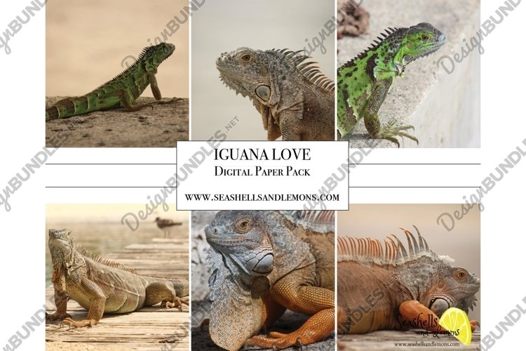 Iguana Photo Bundle - Lizard Photos - Caribbean Iguana Photo example image 1
