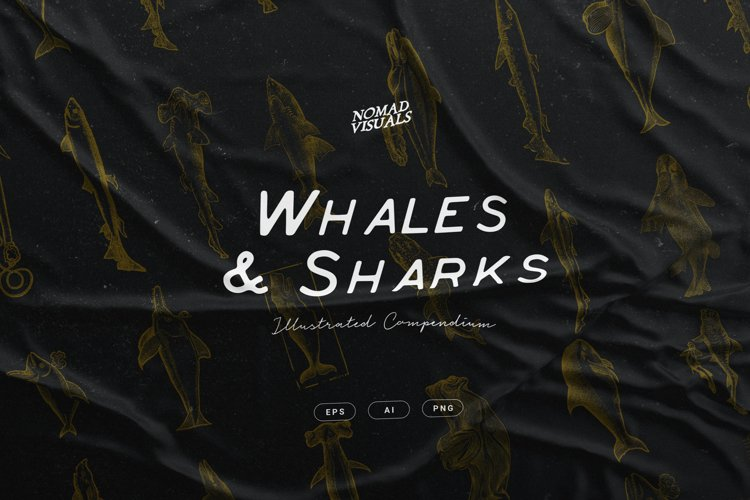 Whales & Sharks Illustrations