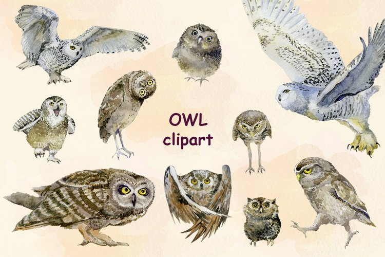 Owl Clipart set png Amazing nature illustration Forest Bird example image 1