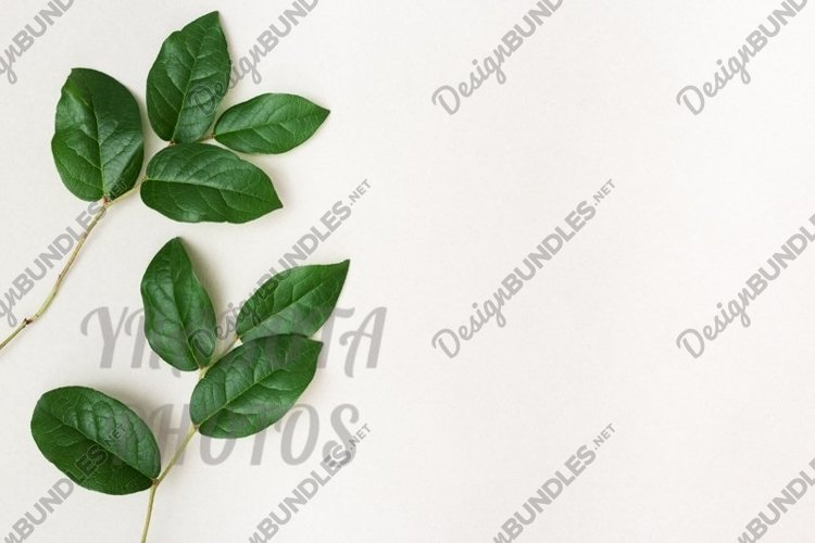 Branches with natural green leaves