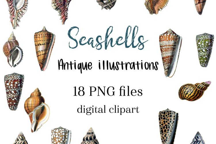 Under the sea clipart, Vintage Seashell Clipart