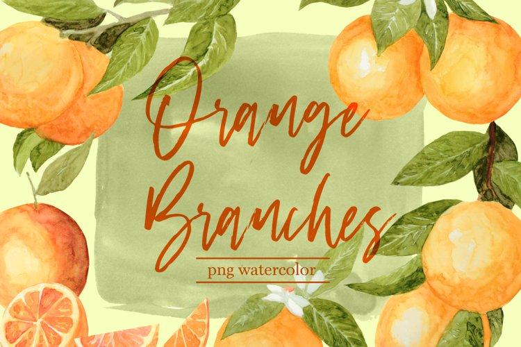 Orange Branches Citrus Fruit Watercolor PNG Clipart