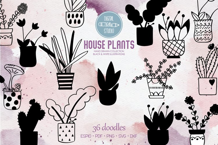 House Plants | Cactus in Flower Pot | Hanging Indoor Plant