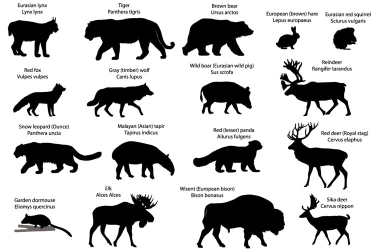 Silhouettes of animals of Eurasia example image 1