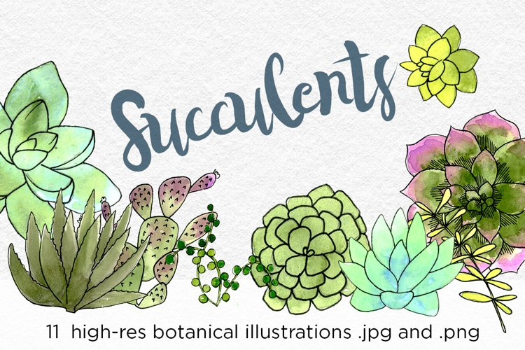 Watercolor Succulents and Cacti Illustrations example image 1