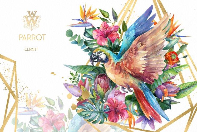 Watercolor parrot clipart, tropical summer clip art t shirt