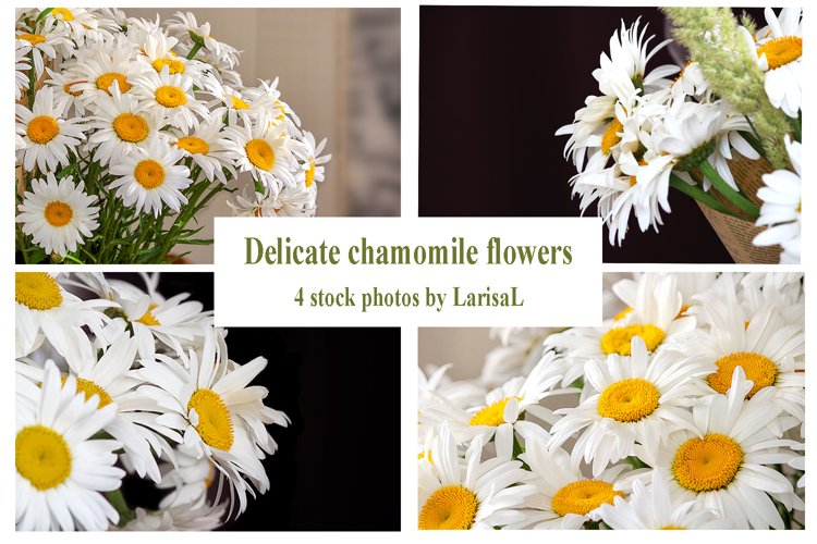 Delicate chamomile flowers, white flower, bouquet, floristry