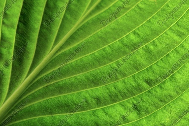 Close up green leaf spring background example image 1