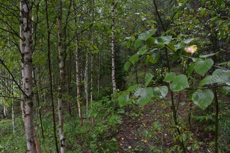 Summer Forest Bundle - 3 photos