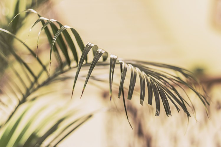 palm branches on a sand background. example image 1