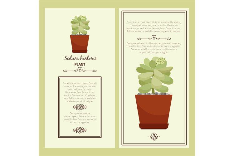 Greeting card with sedum hintonii plant example image 1