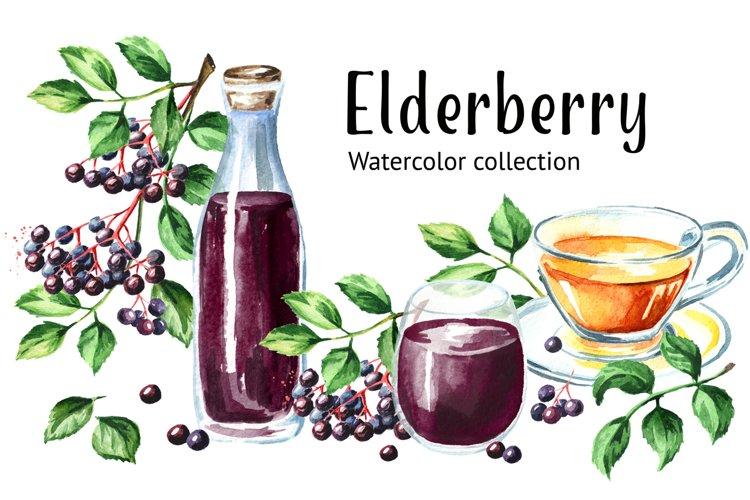 Elderberry. Watercolor collection example image 1