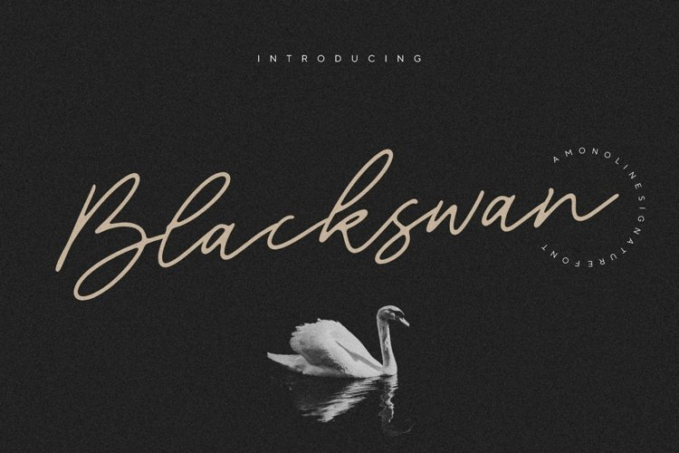 Blackswan Monoline Signature Font example image 1