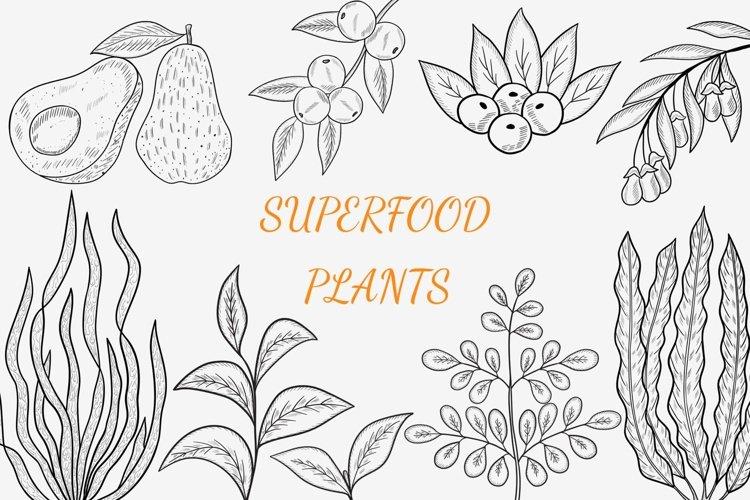 Superfood plants