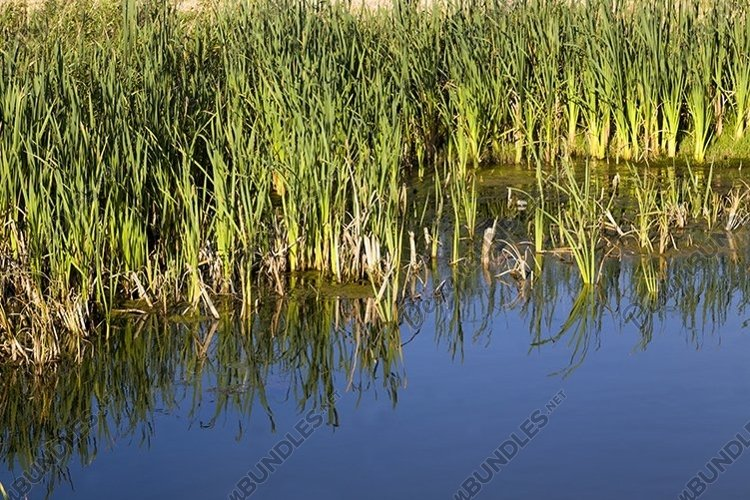 grass by the shore example image 1