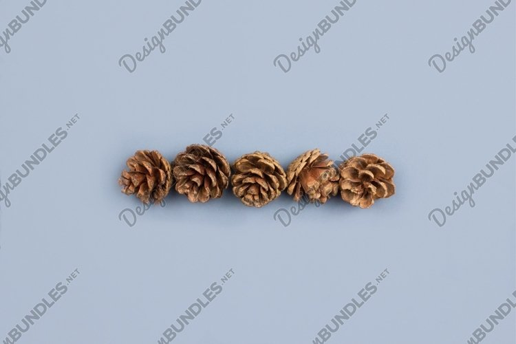 Fir cones. Forest background. Autumn, christmas decorations